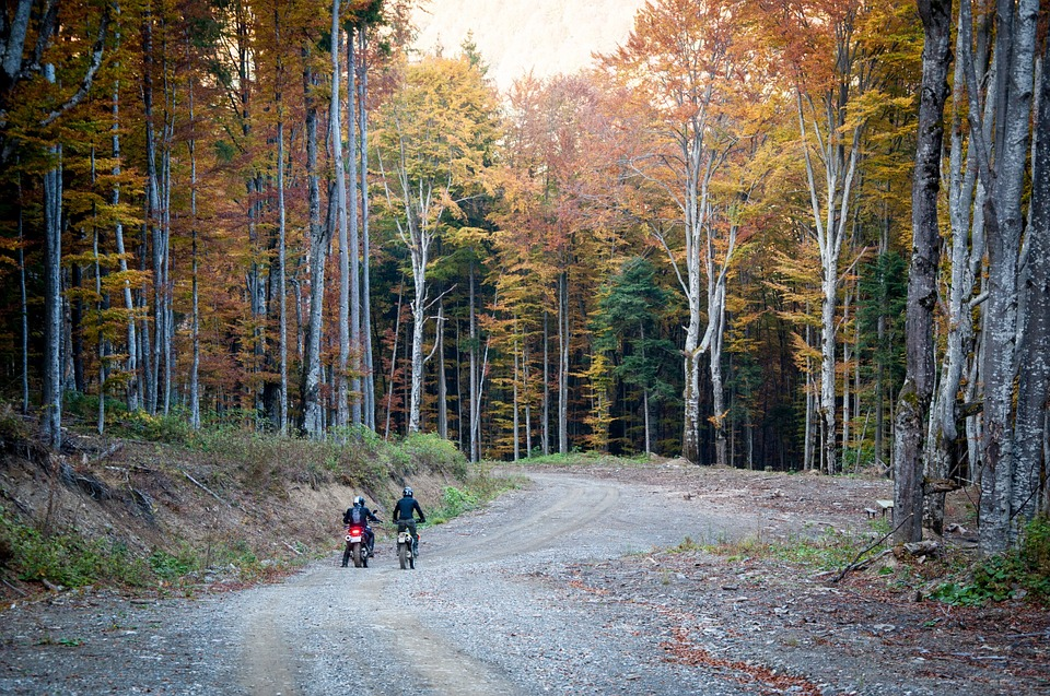 バイク オートバイ 紅葉 木 森 土 ツーリング