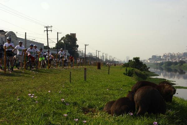 Pedal das Capivaras 2014 (JB Carvalho  Shimano).jpg