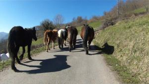Ermita horses