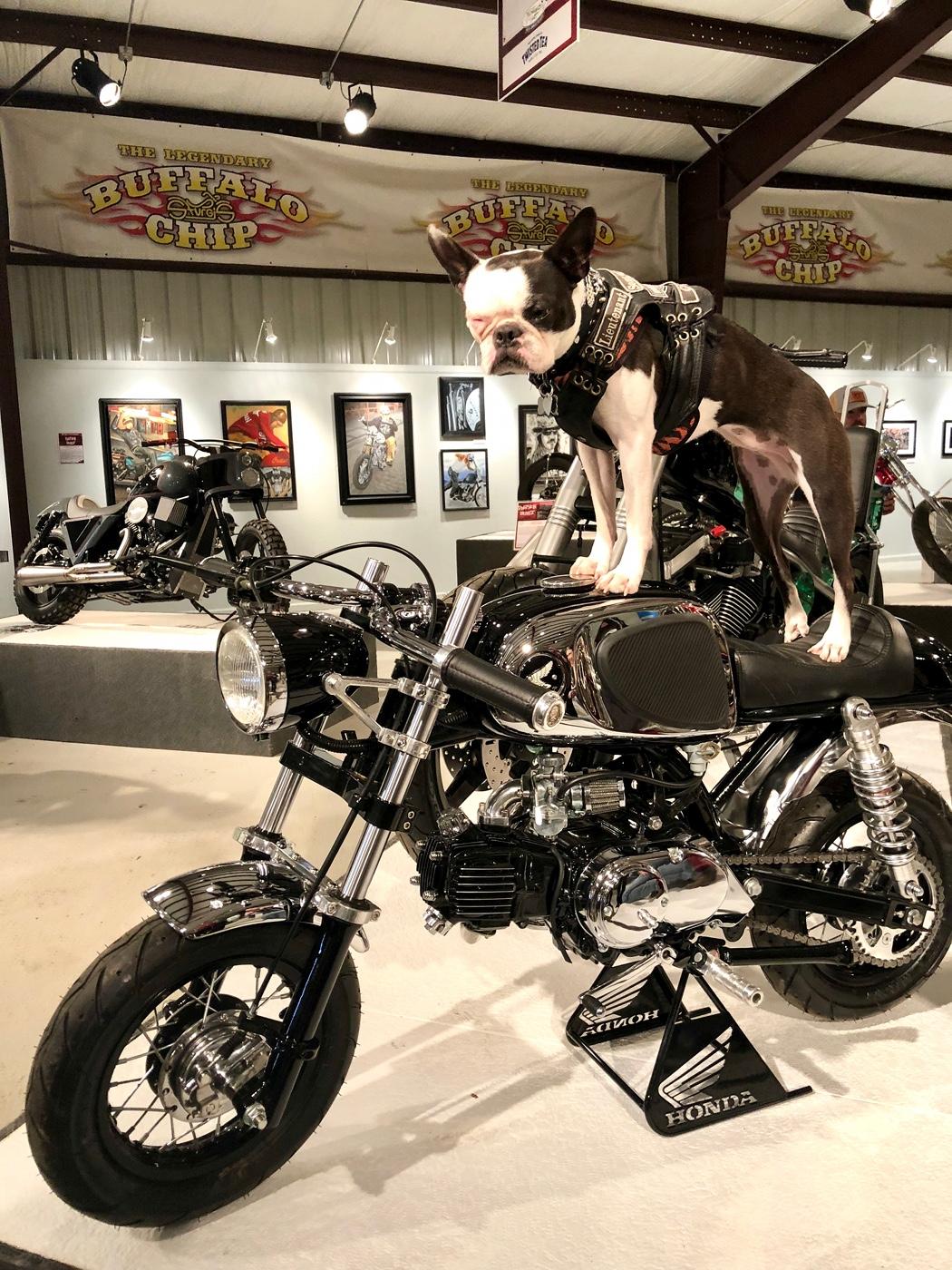 """Honda Monkey Cafe Racer Kit : honda, monkey, racer, Black, Bomber"""", Honda, Racer, BikeBound"""