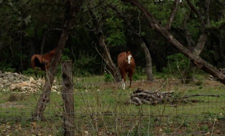 These horses were close to the road when I turned the corner onto Rawhide Trail. But by the time I got my camera out, they had retreated.