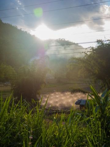 Rýžová pole po sklizni