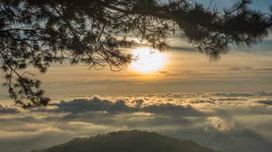 Morning Pine at Doi Ang Khang