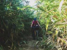 Bambusové tunely na naši cestě z Vang Viengu