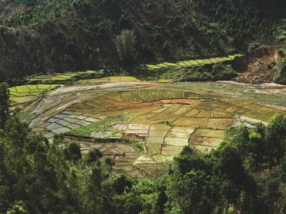 Rice fields in Kon Tum Province