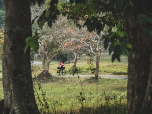 Cycle path in Khao Yai NP