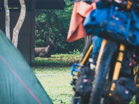 Šesterák v našem kempu v Khao Yai NP