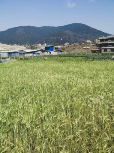 Field, Kathmandu Valley
