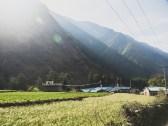 Obilí v ranním slunci. Ghasa, Nepál