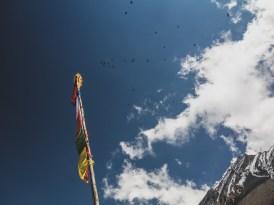 Vrány. Muktinath, Nepál