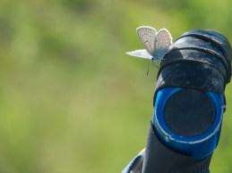 A Butterfly. Kazarman Area, Kyrgyzstan