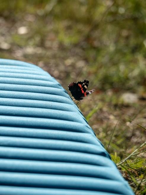A Butterfly. Kolovesi National Park, Finland