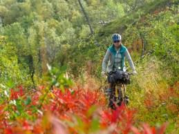 Colours of Swedish autumn. Abisko NP, Sweden