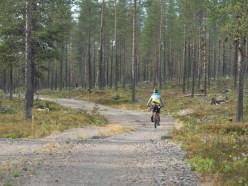 Borovicový les. Vittangi, Švédsko