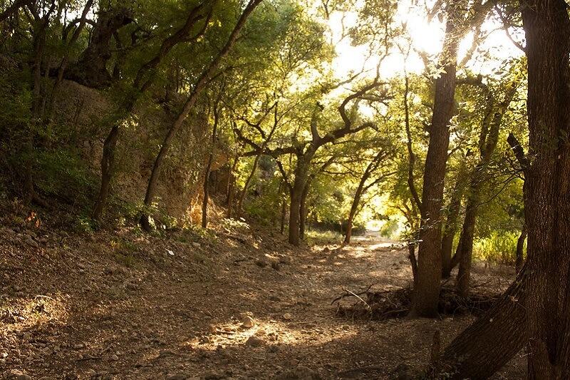 Salado Creek Greenway Flickr Image