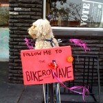 Doggie on bike