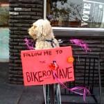Doggie on bike