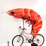 shrimp on bike