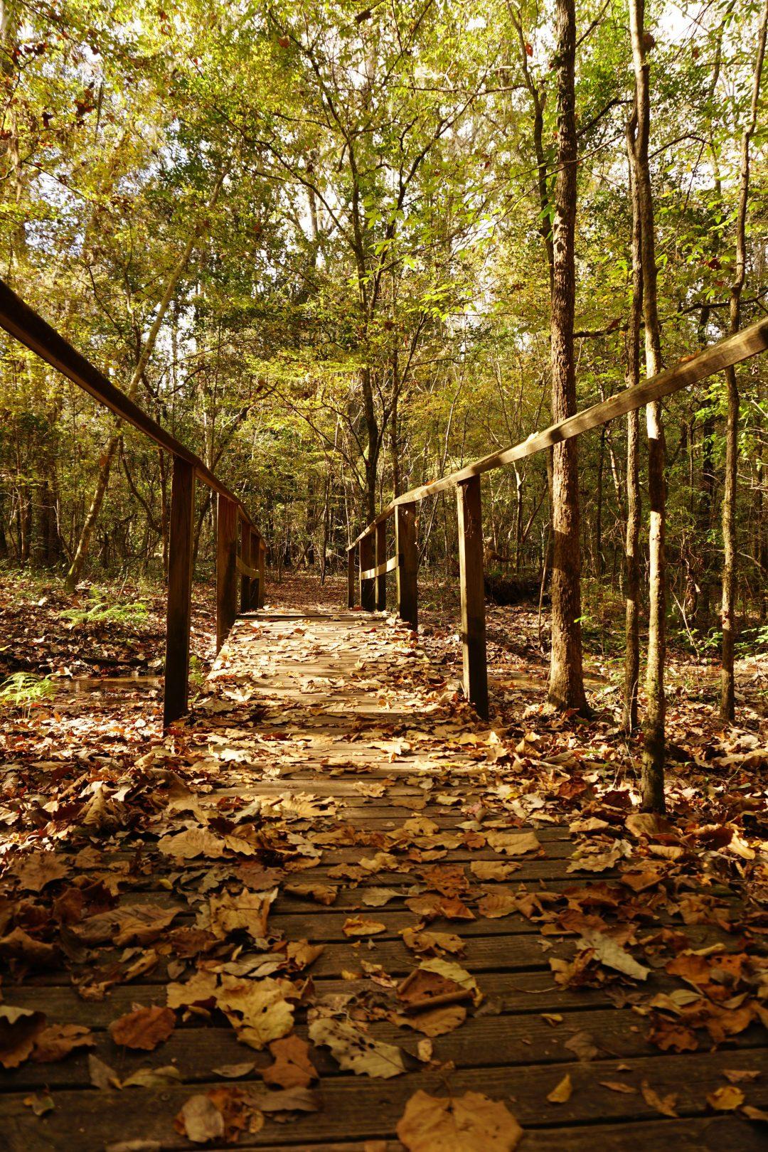 San Felasco State Park Moonshine Creek Trail