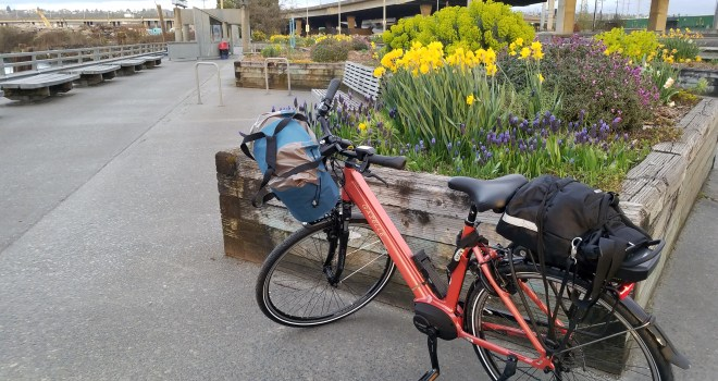 Peach e-bike with bags front and rear parked in front of a raised wooden bed full of blooming yellow daffodils.