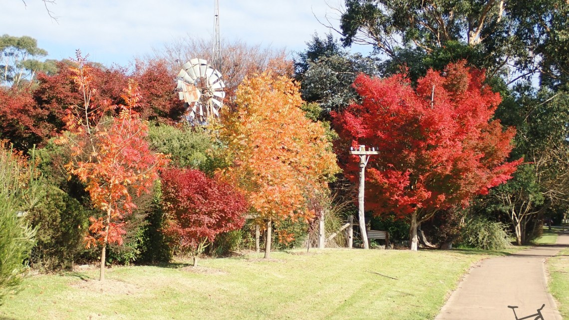 Catch the Autumn Leaves in the Southern Highlands of NSW