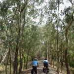 After 8 hours driving from Sydney and two from Melbourne, you come to the #greatvictorianrailtrail now you can ride for 150km with no cars to annoy you.