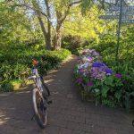 Camillia Gardens