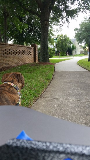 Bella Morena, my 90 lb. pit bull and I go for a walk almost every day. When we find accessible sidewalks that are wide and flat, I feel… Peaceful… Content… Thankful… (Photo by Hector Del Valle, National Spinal Cord Injury Association Central Florida President)