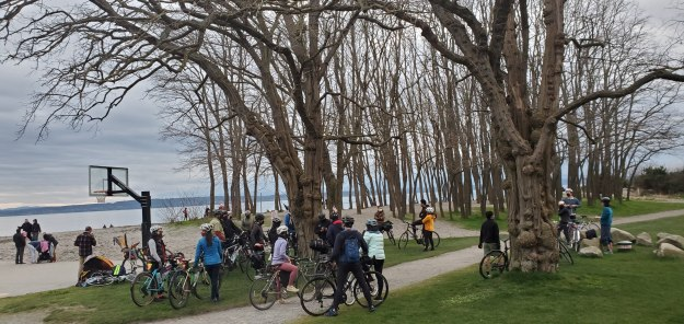 A group of cyclists gather amongst the trees in front of a sandy beach.