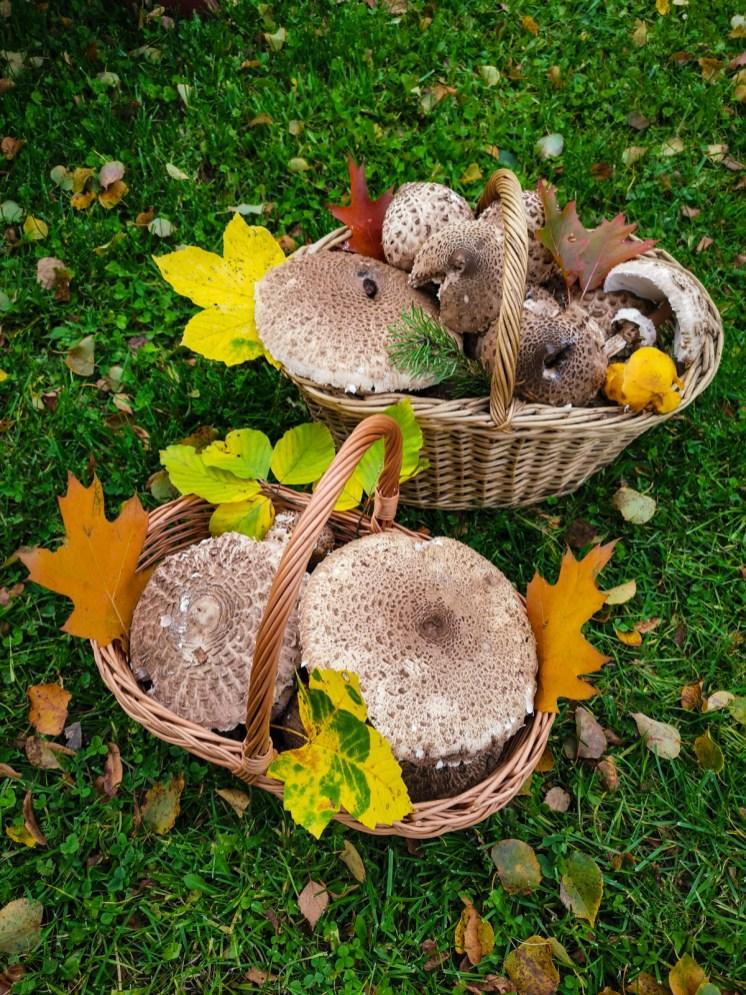Bedly - delicious mushrooms