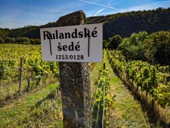 Rulandské šedé - best wine of Moravia