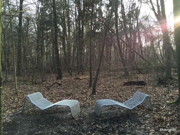 Einladung zur Betrachtung des Walddachs im Bentheimer Forst. mit einem Lächeln auf den Lippen.