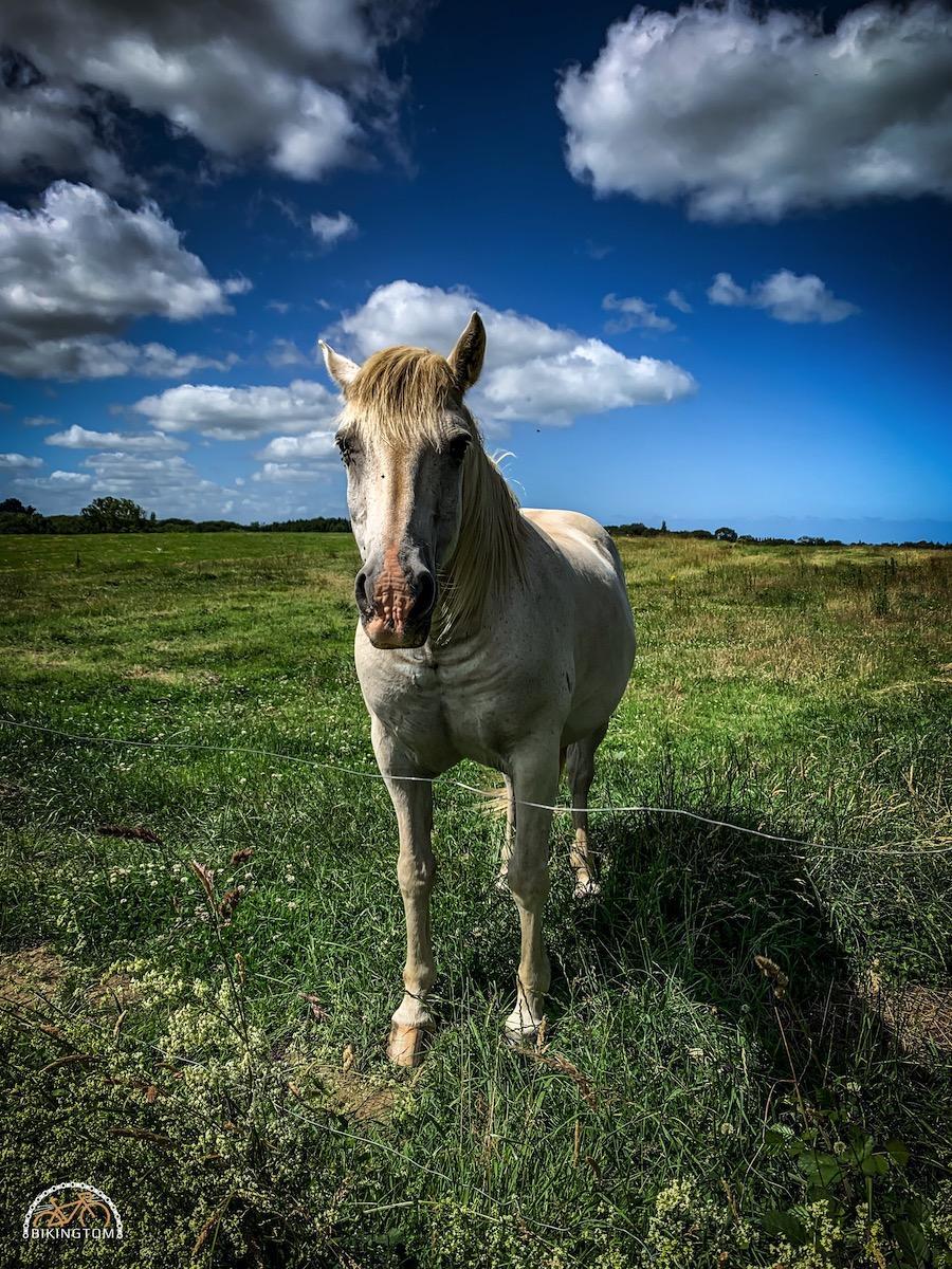 Bretagne,Radtouren,Fahrrad,Pferd