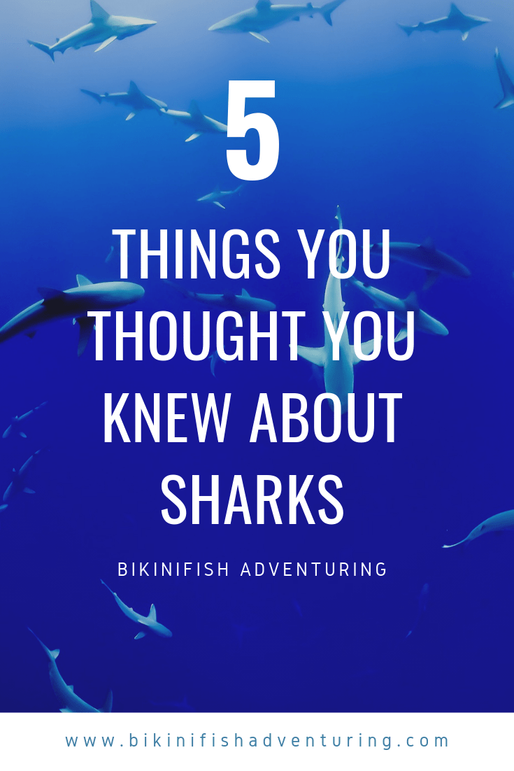 5 Things you thought you knew about sharks