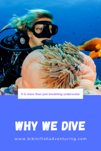 Why we dive