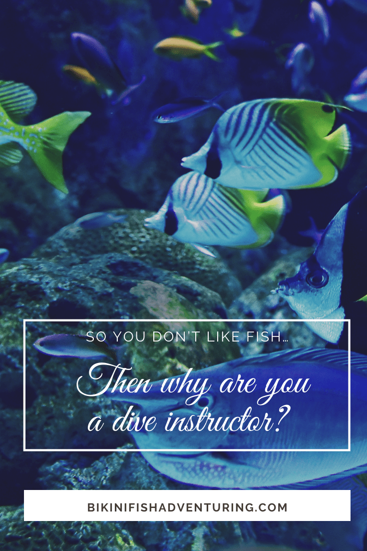 So you don't like fish… then why are you a dive instructor?