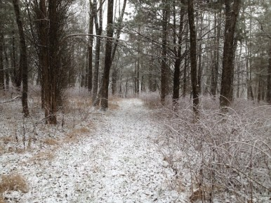 The flurries continued and I decided to head back to the truck - until I saw some more trails.