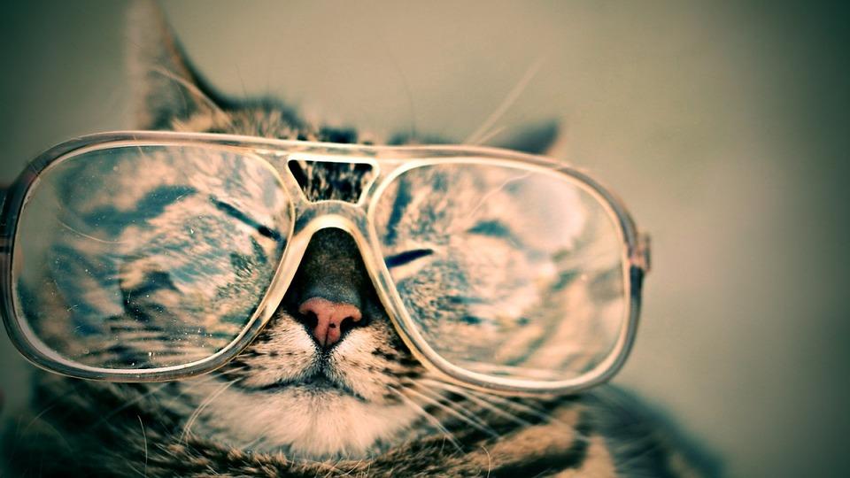唐橋ユミは水着でひもタイプが好き?メガネのブランドと鼻毛も!
