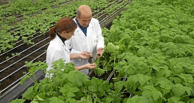 NEIKER-Tecnalia, galardonado por Fontagro por investigar la adecuación del cultivo de patata al cambio climático
