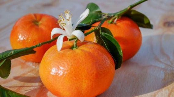 Dónde comprar naranjas en Bilbao