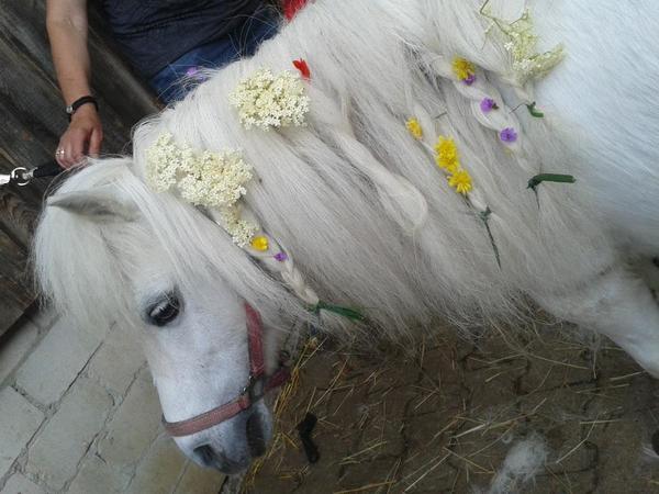 Kindergeburtstag mit Pony s fr Kinder von 4 bis 6 Jahre