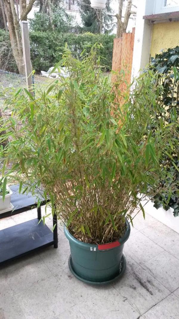 Pflanzkbel Winterhart Pflanzen dachwurz hauswurz