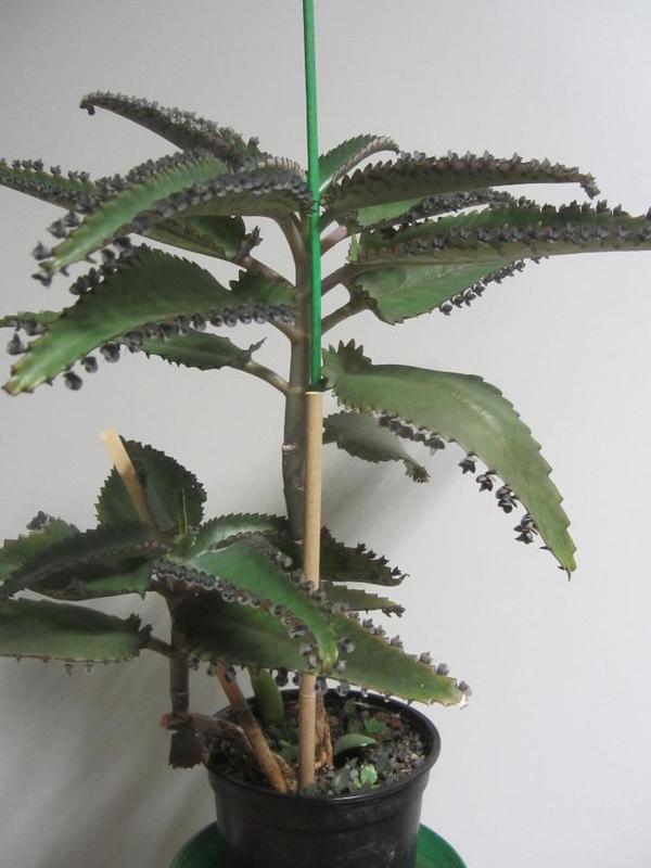 Zimmerpflanzen Mnchen