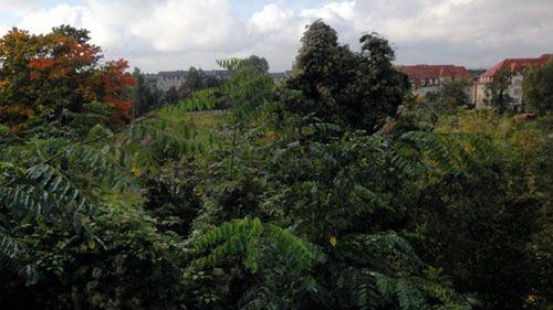 Eine hohe Hecke an der Tannenstraße behindert die Sicht auf das riesige Gelände.