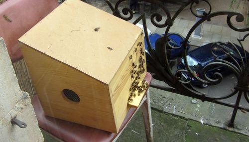 Die ersten Bienen nahmen den neuen Kasten schon an.
