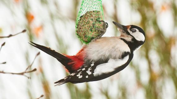 Vogelschutz Futterkugel Kann Zur Falle Werden So Füttern Sie Die