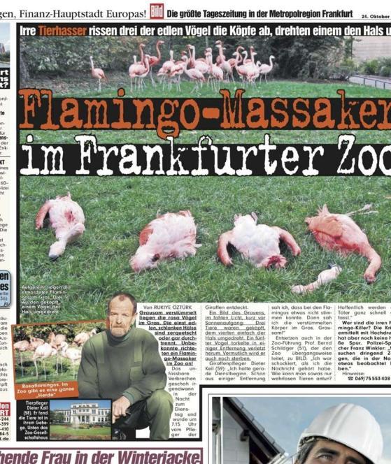 Im Oktober 2007 wurden schon einmal Flamingos geköpft