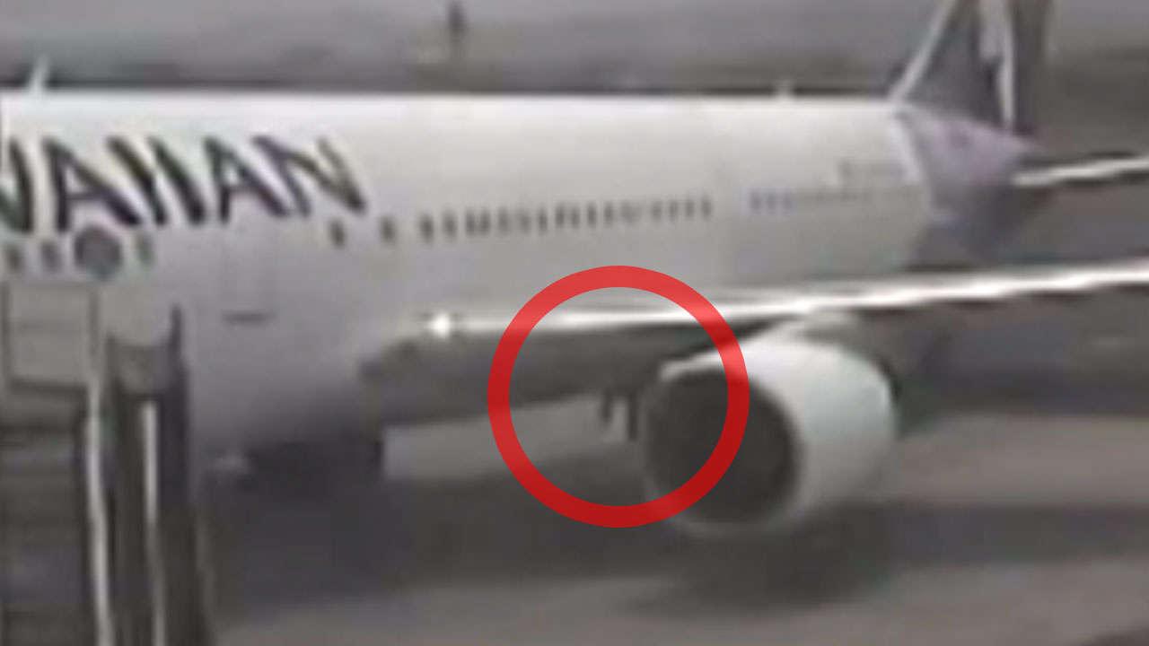 Hier springt ein blinder Passagier vom Flieger  News