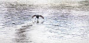 I'm a Water Starter (Melodie von THE PRODIGY)