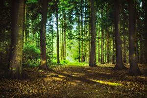 Wald in Schleswig-Holstein